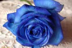 निळे निर्माल्य !