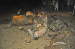 गौ वंशियो की हत्या के लिए जिम्मेदार कौन ?