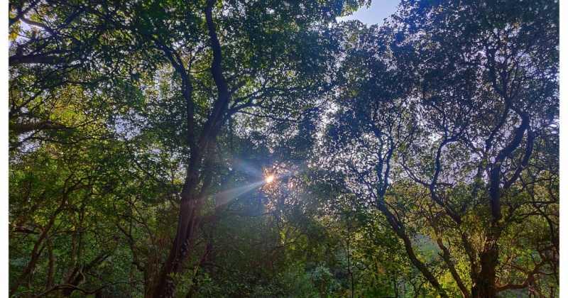 जावळीच्या जंगलातला वासोटा (अनुभव - सुप्रिया गाडे, सागर कुलकर्णी, अमित देशमुख)