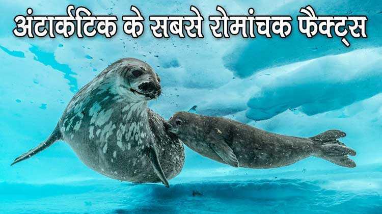 अंटार्कटिक महाद्वीप की रोमांचक जानकारी - Information About Antarctica In Hindi
