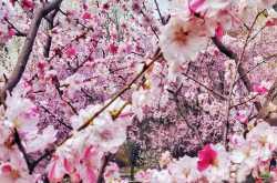 5 centimeters per second | poetry form - haibun