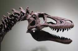 baby t-rex fossil listed for sale on ebay for $3 million - let me shout