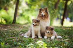 Big Fluffy Dogs - 11 Most Adorable & Huggable Canine Breeds