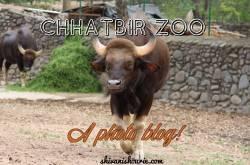chhatbir zoo- a photo blog!