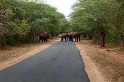 Conflict betwen man and elephants on the rise in Odisha