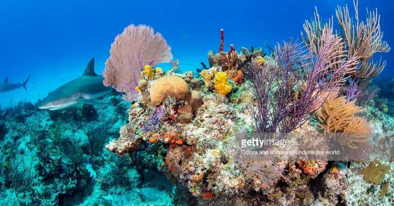 Coral Reefs Are In Danger