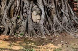 day trip to ayutthaya, the second capital of thailand - lemonicks - indian travel blog