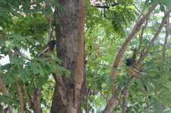 foto friday 194: birds on a tree