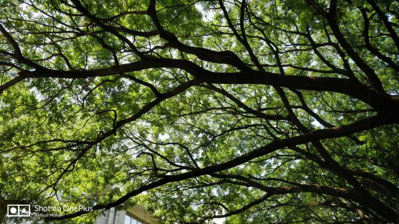 Foto Friday 196: The Canopy
