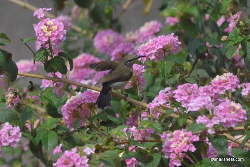 Foto Friday 197: Return Of The Sunbird