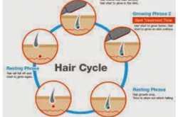 Hair Transplant - Hair Cycle