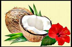 Hibiscus and Coconut Milk for Hair Loss in Women - Beauty and Fitness for Women