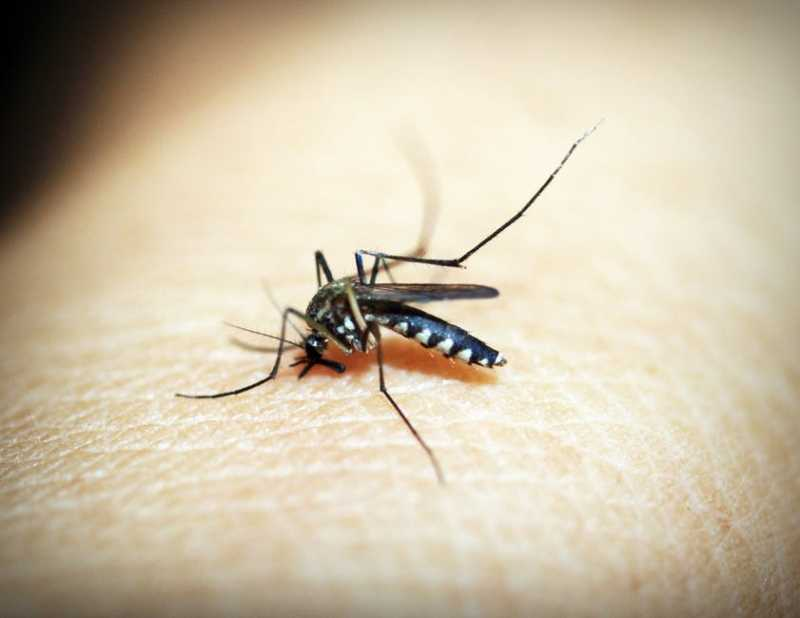 How To Ensure Complete Mosquito Protection Of Family During Monsoon - ZenithBuzz