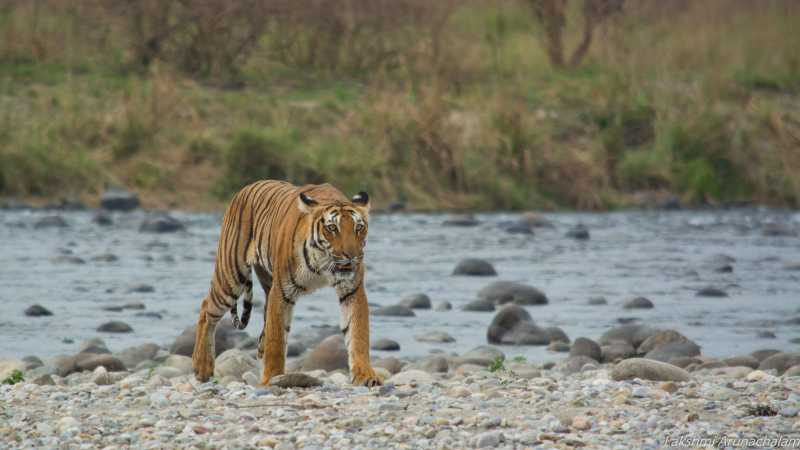 Jim Corbett National Park - A COMPLETE Guide For Spotting A Tiger