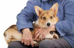Lap Dogs 101 - The Top 15 Best Dog Breeds for Families & Seniors