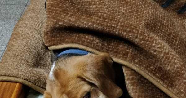 Let Sleeping Dogs Lie #WordlessWednesday