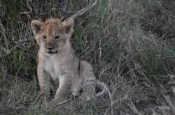 Masai…