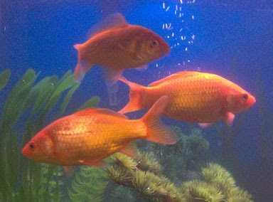 Meet Mr.Fish