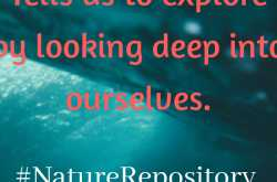 o - ocean - lessons from #naturerepository