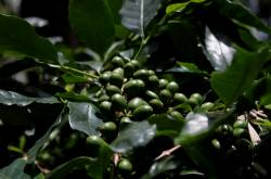 Once There Was A Coffee Bean - Homestay in Chikmagalur