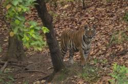 paw land ~ welcome to tiger country, bandhavgarh - pebblewalks