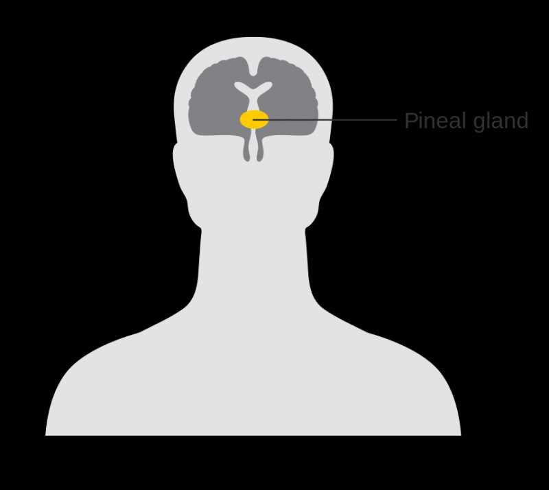 PINEAL GLAND FUNCTION, LOCATION, CALCIFICATION, DECALCIFICATION
