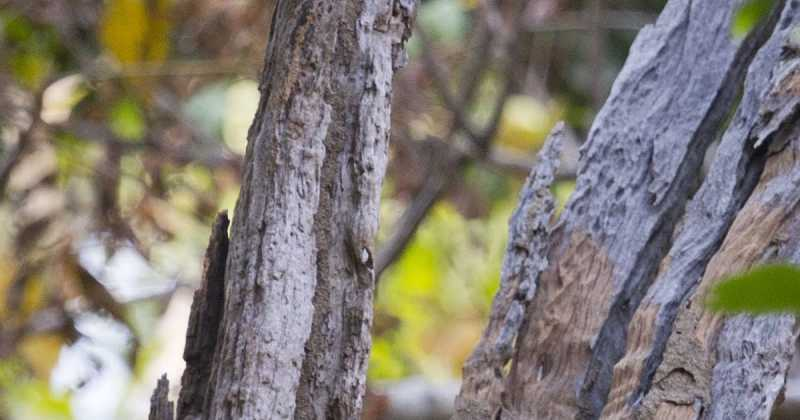 Pench - Nov 2018 Photos
