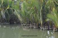 Photo Gallery- Sundarban National Park