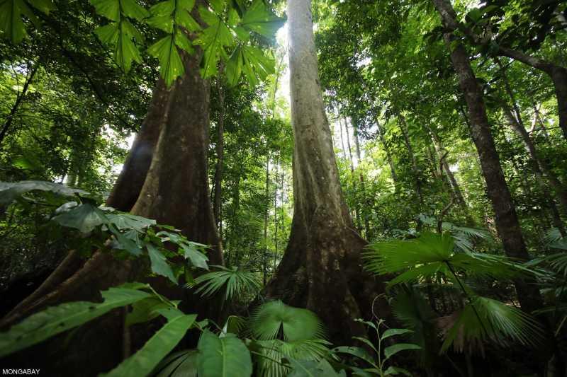 Rainforests Are Under Constant Surveillance By Mini Satellites Called