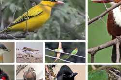 saul kere - a treasure trove of birds