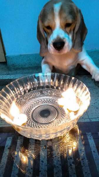 Simba Wishes Everyone A Happy Diwali