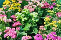 Surat Flower Show 2019