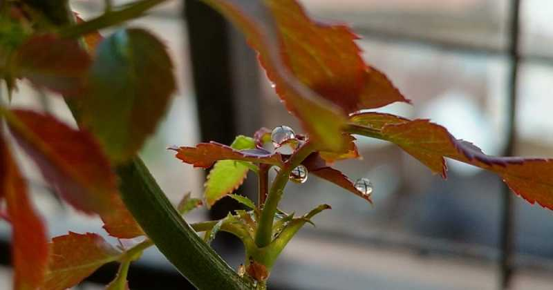 THE DROP ON THE LEAF..