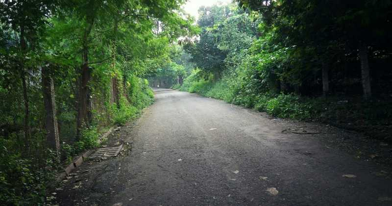 The Untravelled Road