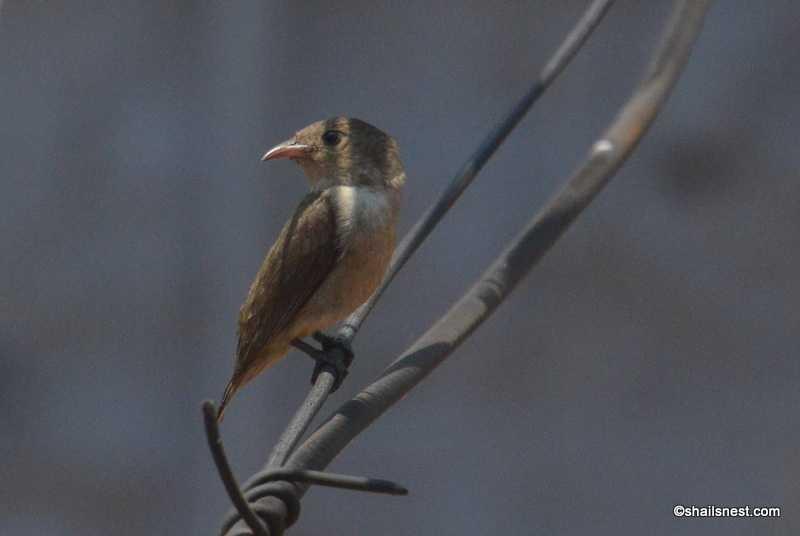 The Tiny Bird