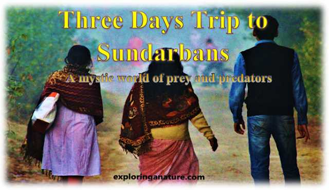 Three Days Trip To Sundarbans- A Mystic World Of Prey And Predators