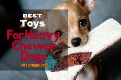 Toughest Dog Toys: Top 10 Best Chew Toys For Your Pets (Reviews) 2018