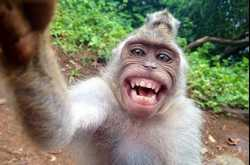 why the monkey laughs at shoddy research and bad scientists